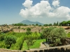 Panoramic view of the Pompeii vinyards (Mount Vesuvius in the background) - Pompeii, Italy 2014