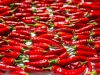 drying-chili-peppers---september-2015_20748682293_o
