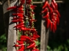drying-chili-peppers---september-2015_21205382378_o