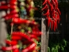 drying-chili-peppers---september-2015_21358128142_o