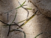 sea-weed--at-hotel-tryp-cayo-coco-cuba_19767729371_o